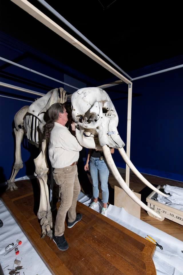 animaux - Exposition Les animaux du roi à Versailles 24339510