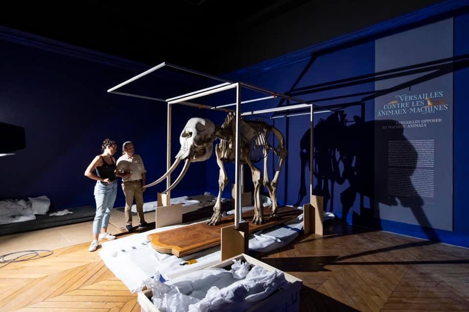 animaux - Exposition Les animaux du roi à Versailles 24350810