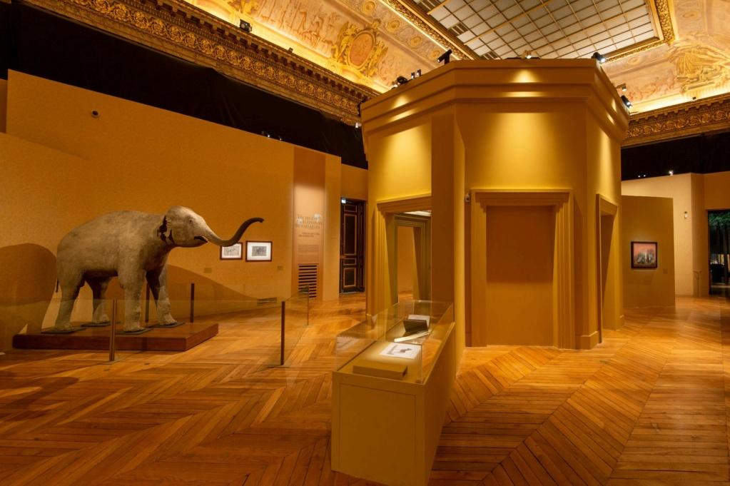 Exposition Les animaux du roi à Versailles - Page 2 24516810