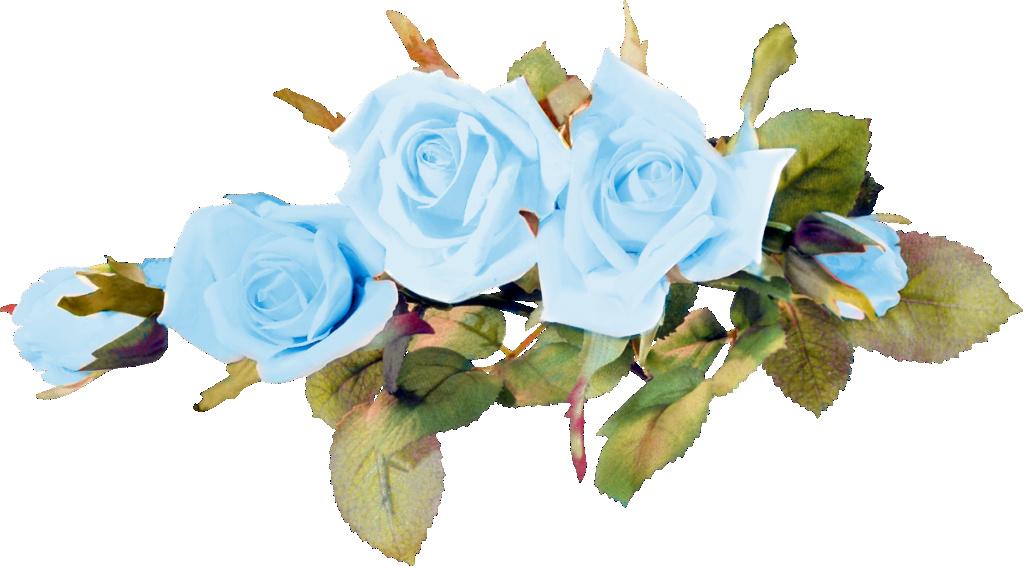 ::Desfile de Rosas AMDA::Hoy se presenta la Rosa Azul AMDA  1_31c_10