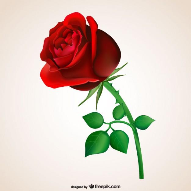 ::Desfile de Rosas AMDA::Hoy se presenta la Rosa Roja AMDA  Rosa_r10