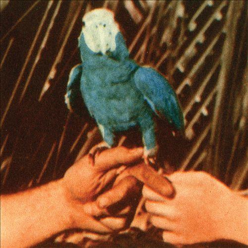 Andrew Bird Image-12