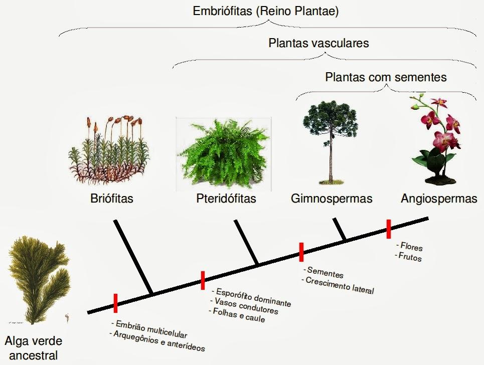 Botânica Evoluz11