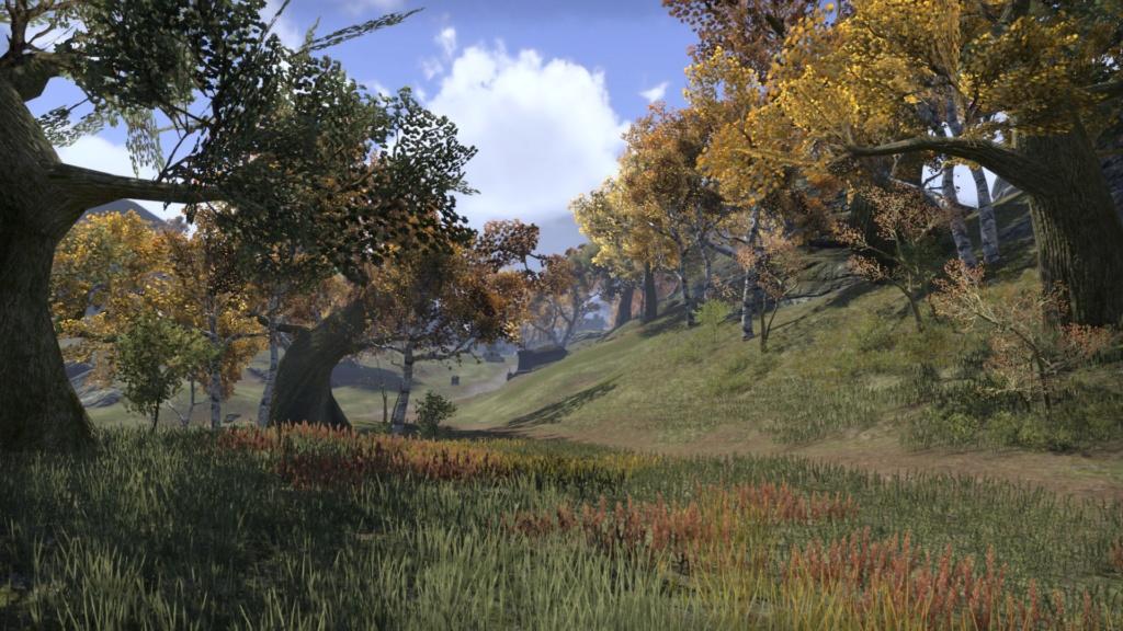 La Grande forêt 20181191
