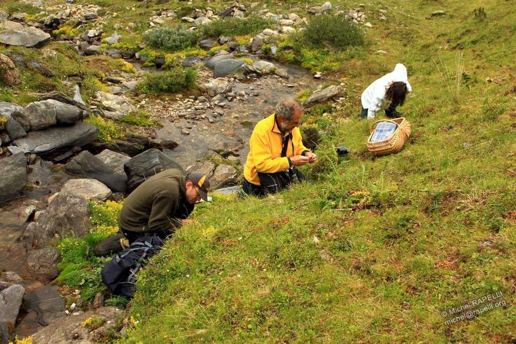 Micologia alpina Img_3810