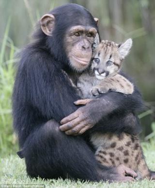 Chien, chat, etc… retrouverons-nous nos animaux de compagnie au Paradis ? Chimpa10