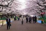 En plein centre de Tokyô