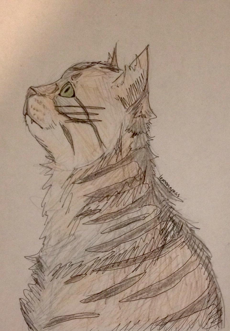 Anyone want their kitties hand-drawn? Bearpa11