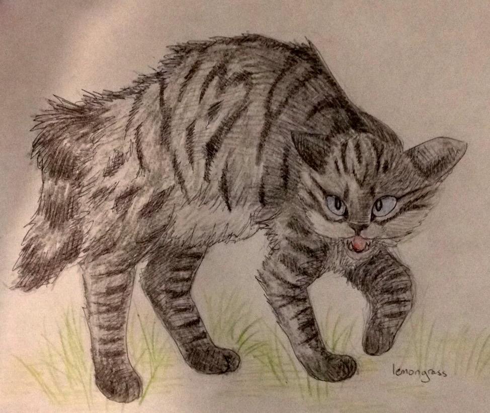 Anyone want their kitties hand-drawn? Darkpa11