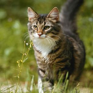 lemongrass's kitties Fernki13