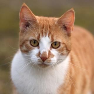 lemongrass's kitties Finchb10