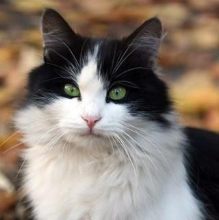 lemongrass's kitties Hollyf10