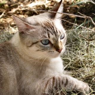 lemongrass's kitties So_war13