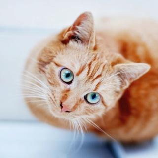 lemongrass's kitties Tumblr17