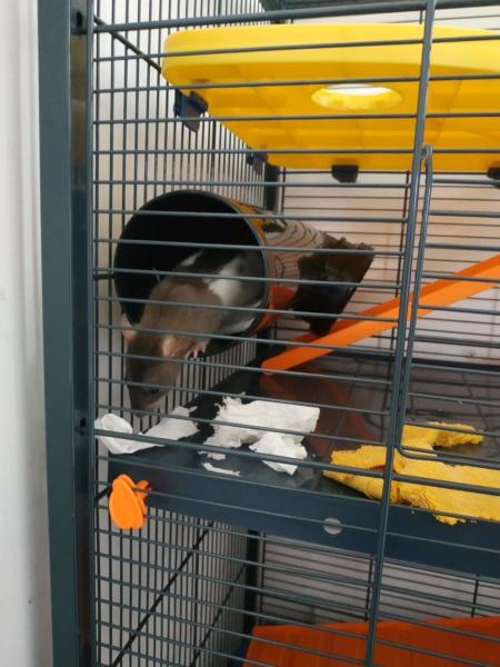 cage zoolux maxi loft Img_2013