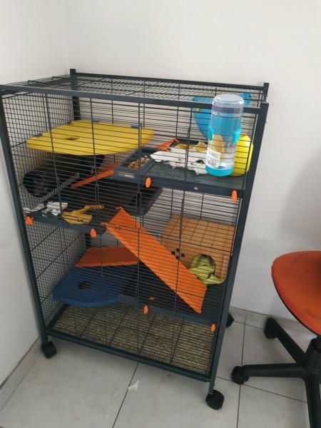 cage zoolux maxi loft Img_2014