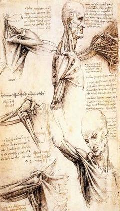 Ethan K. Packer - Página 3 Anatom10