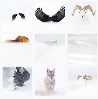 un grand photographe animalier Oip_311