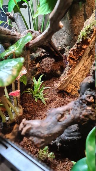 Terra pour gecko a crete, votre avis svp 20201014