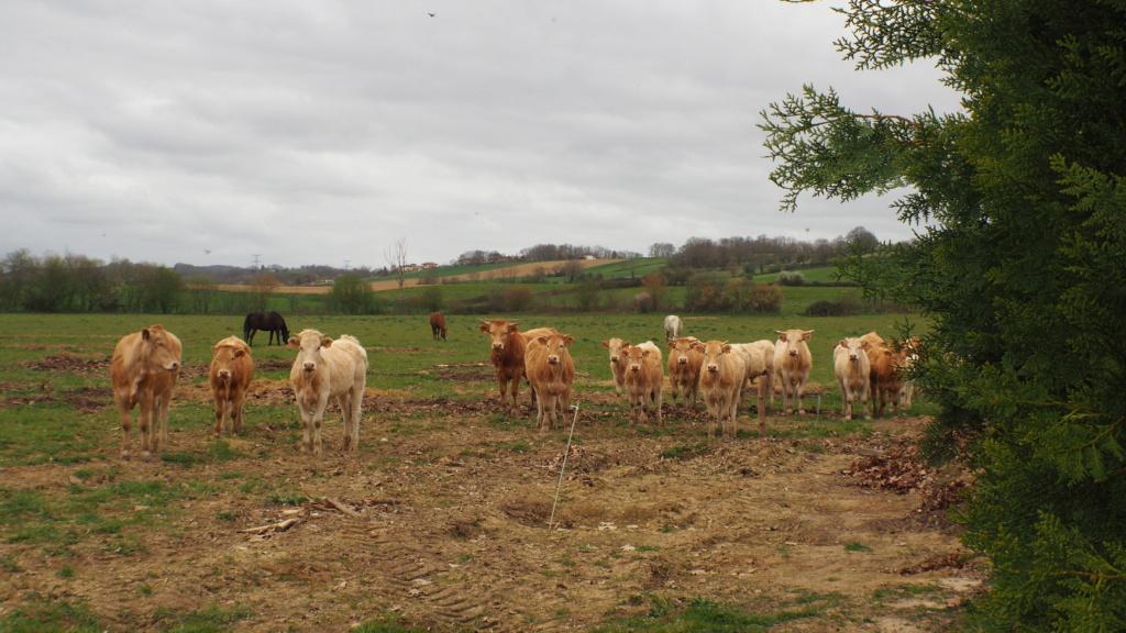 Sortie Flash 27/03 : GERS - Les gorges de la Save P3270013