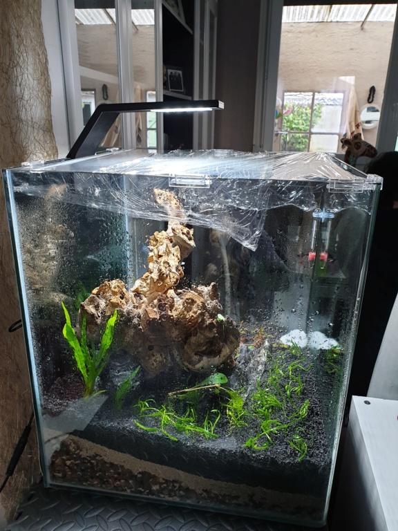 Mon Nano cube de 60 litres (Dry Start) Nano_015
