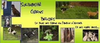 le Blog des Chiens en Famille d'Accueil et des Chats aussi.. Fa_ban10