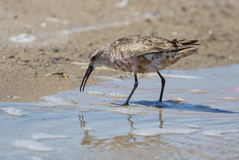 Réserve ornithologique du Teich 02_bzo10