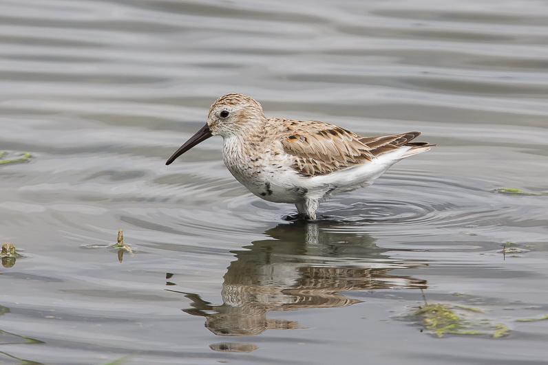 Réserve ornithologique du Teich 03_bzo10