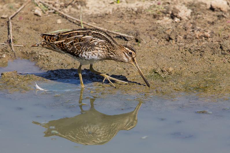 Réserve ornithologique du Teich 03_bzo11