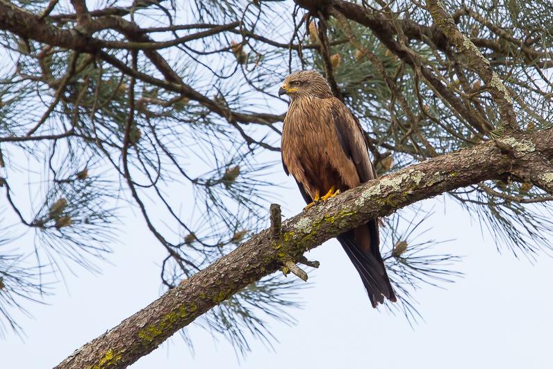 Réserve ornithologique du Teich 03_mil10