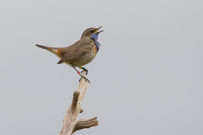Réserve ornithologique du Teich 07_gor10
