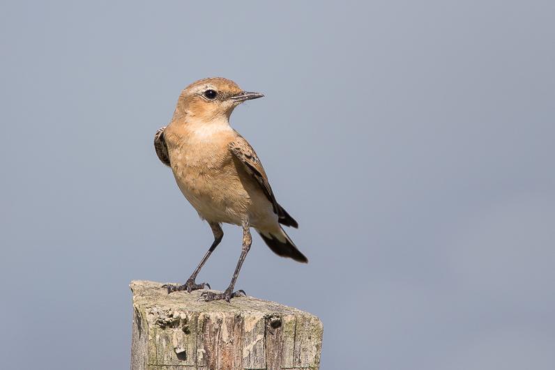 Réserve ornithologique du Teich 08_tra10