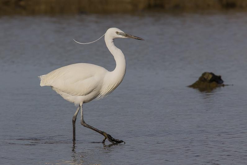 Réserve ornithologique du Teich 11_aig10