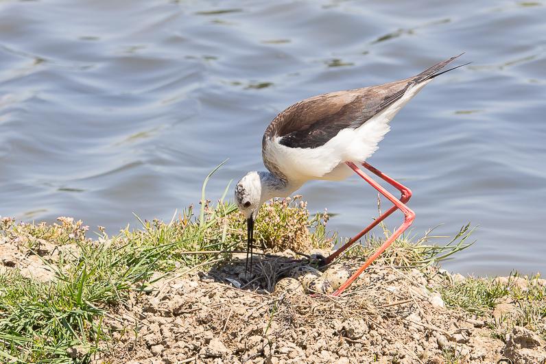 Réserve ornithologique du Teich 21_ech10