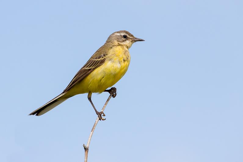 Réserve ornithologique du Teich Berger10