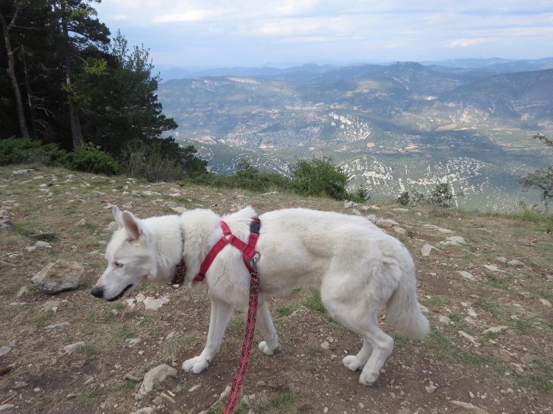 Yocco et Anook au Mont Serein 09_yoc10