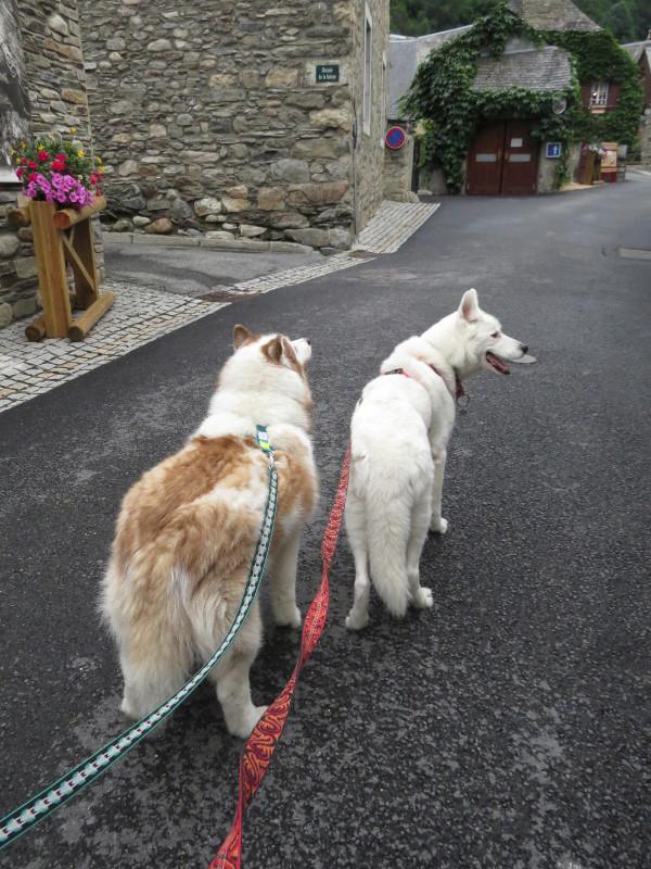Yocco et Anook dans les Hautes-Pyrénées 19_ano10