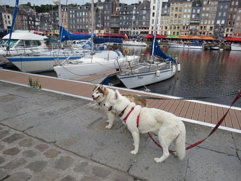 Yocco et Anook en Normandie 24_ano10