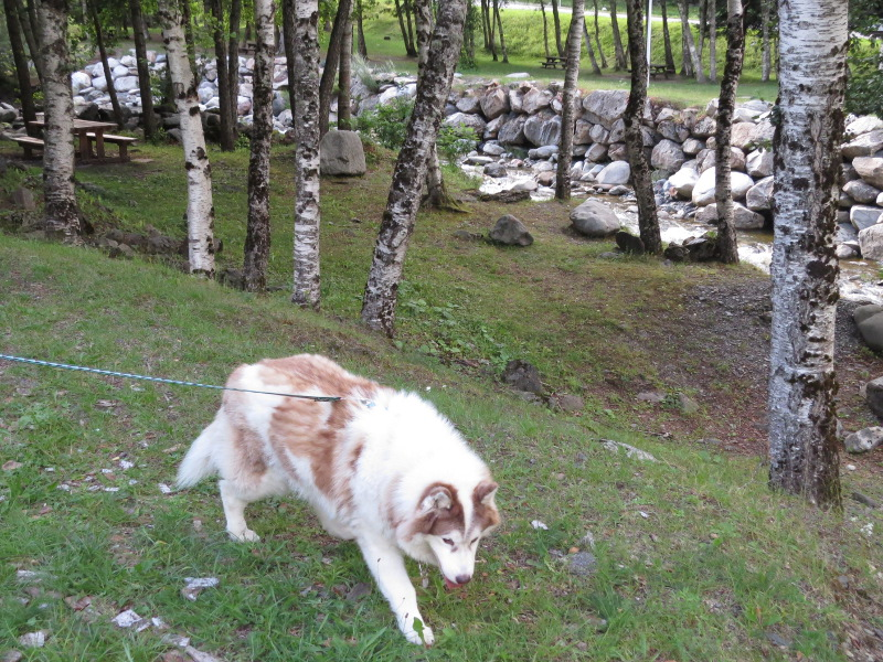 Yocco et Anook dans les Hautes-Pyrénées 26_ano10
