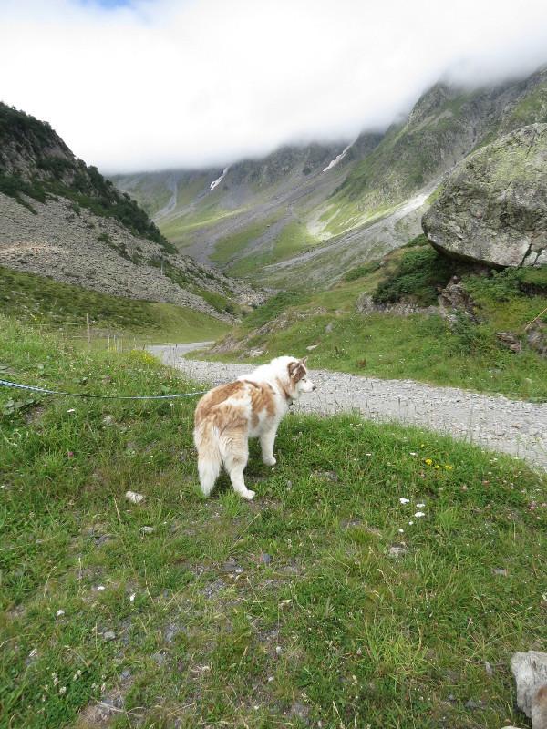 Yocco et Anook dans les Hautes-Pyrénées 29_ano11