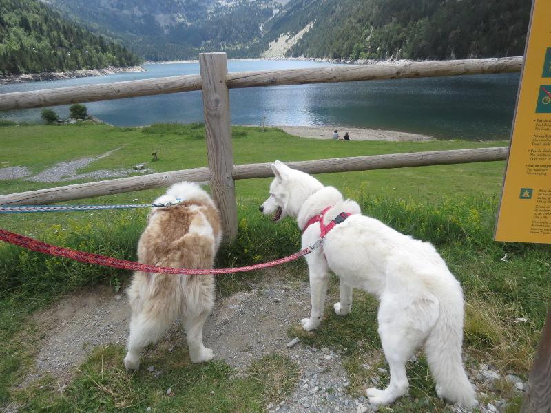 Yocco et Anook dans les Hautes-Pyrénées 34_ano10