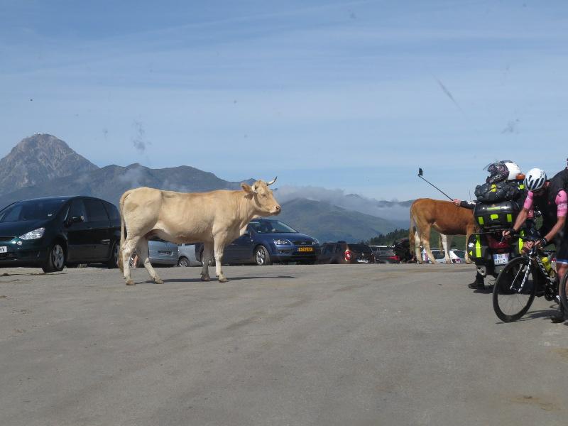 Yocco et Anook dans les Hautes-Pyrénées 40_col10