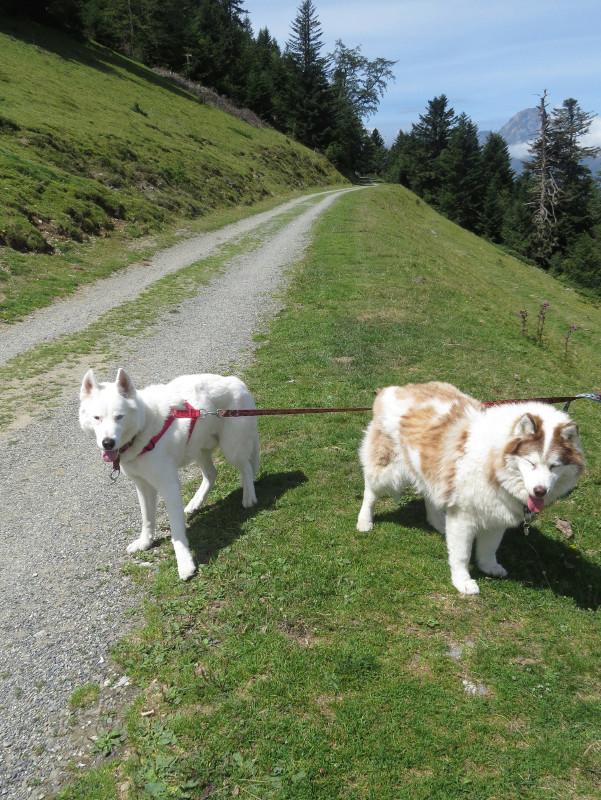 Yocco et Anook dans les Hautes-Pyrénées 43_yoc11