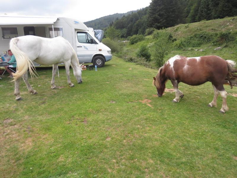 Yocco et Anook dans les Hautes-Pyrénées 52_che10