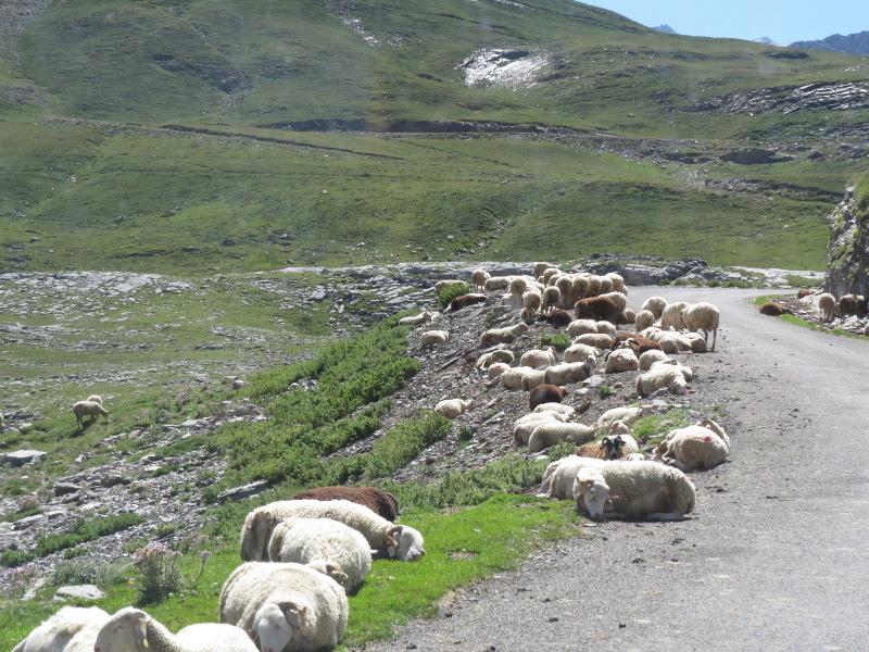 Yocco et Anook dans les Hautes-Pyrénées 63_mou10