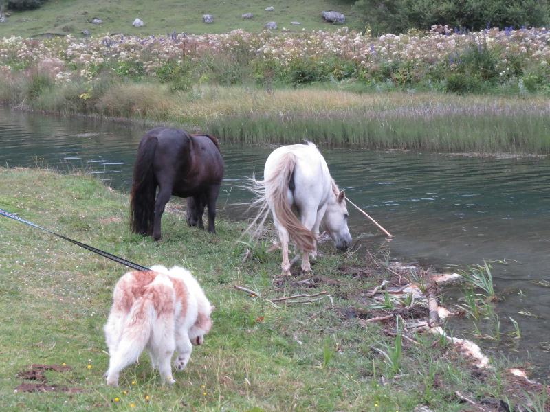 Yocco et Anook dans les Hautes-Pyrénées 71_ano10