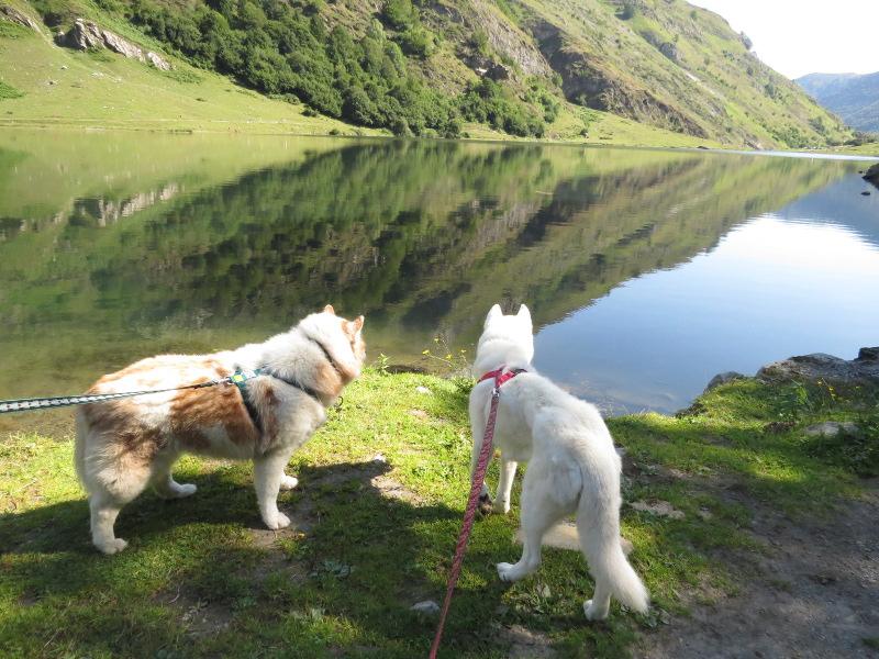 Yocco et Anook dans les Hautes-Pyrénées 75_ano10