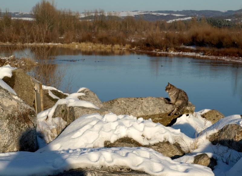 neige en bord de loire P1062810