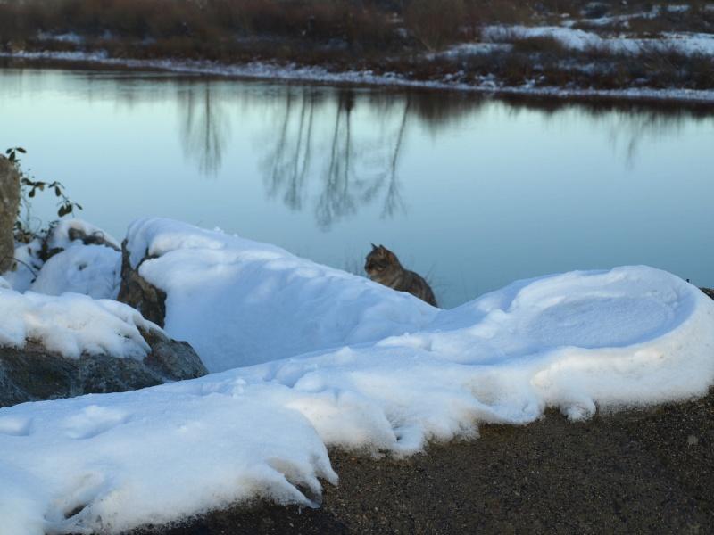 neige en bord de loire P1062811