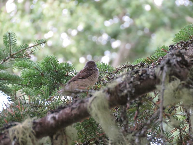 Petit oiseaux à identifier  Img_2212